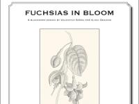 Fuchsias in bloom